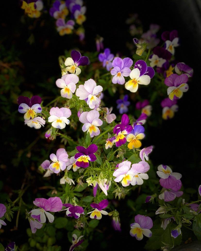 Små blommor i olika färger